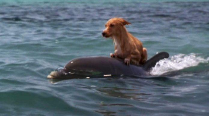 Dupini su spasili psa od utapanja u ovoj divnoj priči
