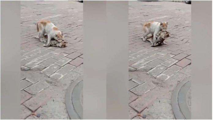 Mačka je očajnički pokušavala pomoći svojoj prijateljici, nadajući se da nije prekasno