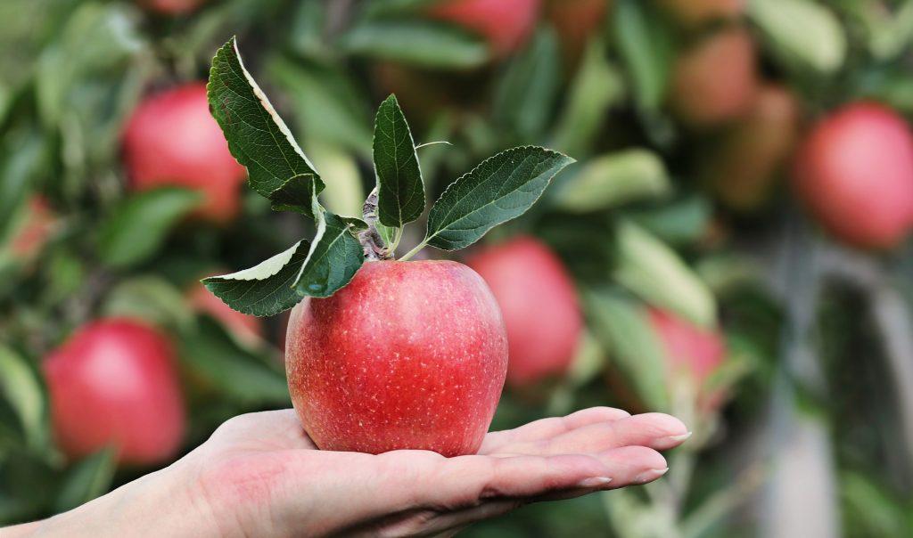 najzdraviji dio jabuke