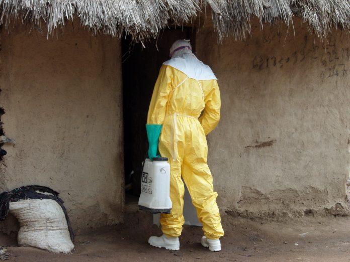 Malene životinje šire ubojiti virus, opasniji od ebole