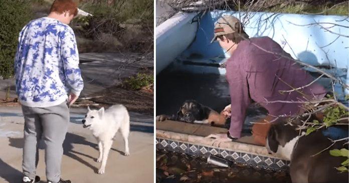 tinejdžeri uočili dva psa