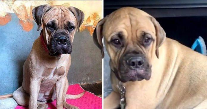 Pas iskočio iz vlaka i prešao 200 km kako bi se vratio vlasnicima koji su ga napustili