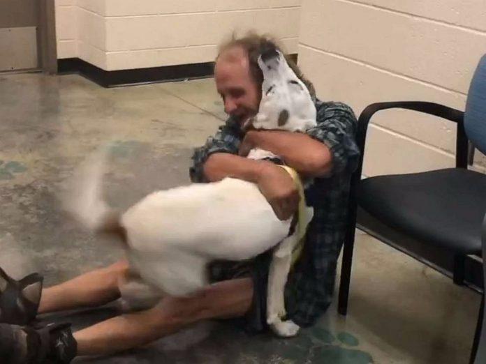 Beskućnik se ujedino s psom kojeg je izgubio, a njihov susret će vas rasplakati