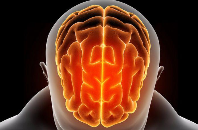 Činjenice o mozgu