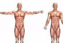 12 nevjerojatnih činjenica o tijelu koje mogu poboljšati zdravlje