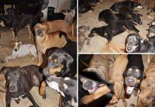 Spasila je 97 pasa od uragana Dorian, smjestila ih je u svoj dom