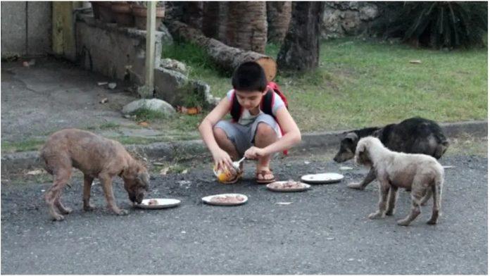 Dječak sav novac troši na pse lutalice koje hrani