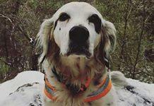 Hrabri pas poginuo braneći svoju obitelj od napada medvjeda