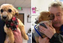 Psu su zalijepili njušku i bacili ga s mosta, slučajni prolaznik mu je spasio život