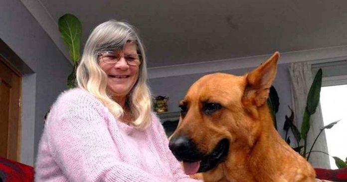 Pas spasio život vlasnici koja ima dijabetes