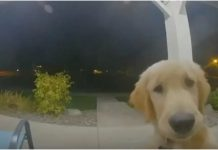 Pametni pas pozvonio na vrata