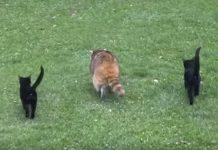 Slijepom rakunu je dala hranu, a drugi dan se pojavio s dvojicom prijatelja