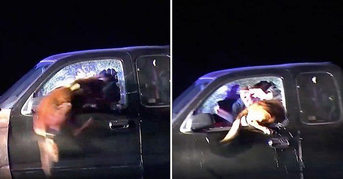 Pas skočio kroz prozor automobila kako bi uhvatio nasilnika