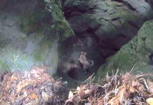 Planinar je šetao šumom, a onda čuo strašne zvukove iz špilje