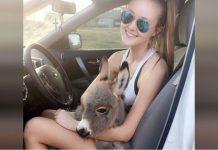 Djevojka se brine za malenog magarca koji je ostao bez roditelja