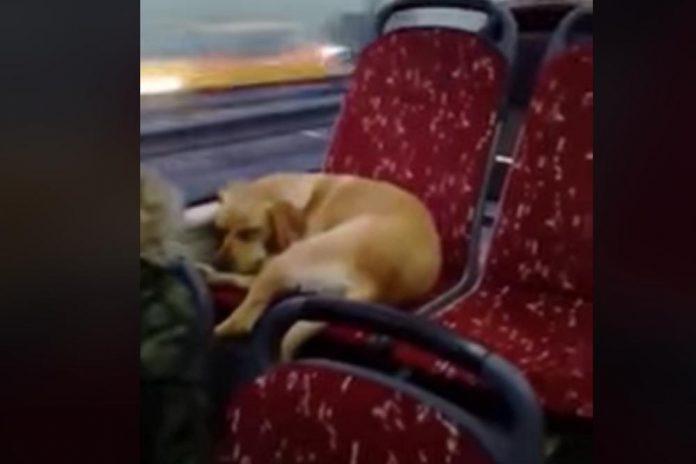 Promrzli pas je ušao u autobus, a njegova reakcija topi i najtvrđa srca