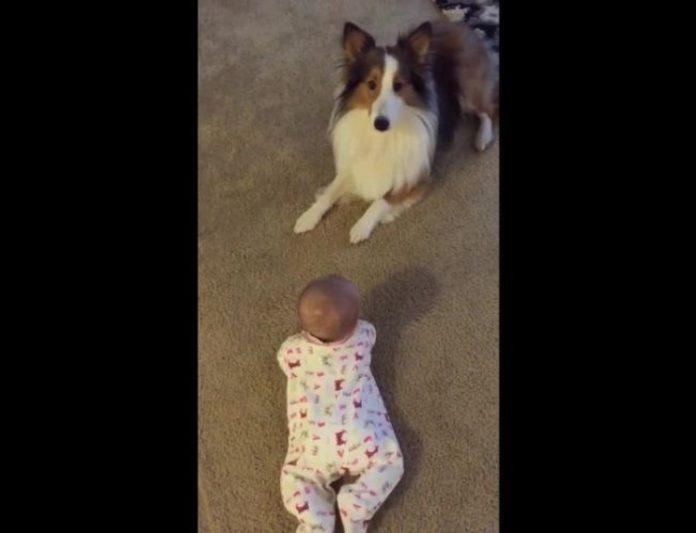 Mama se iznenadila kada je vidjela što je pas naučio njenu bebu