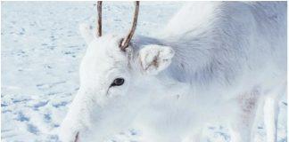 Ovaj je fotograf uspio uslikati vrlo rijetku bijelu životinju