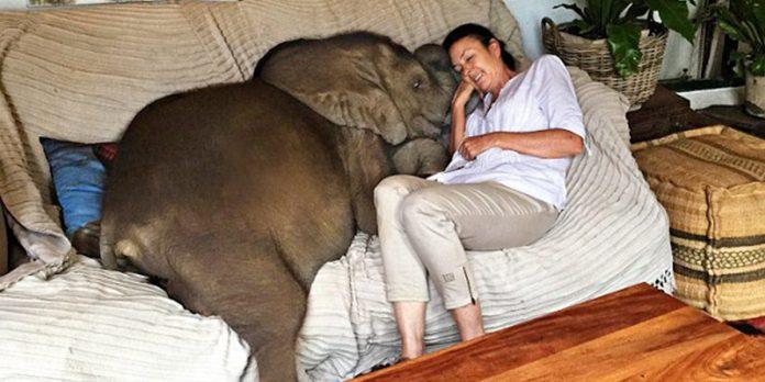 Žena je spasila malog slona od utapanja