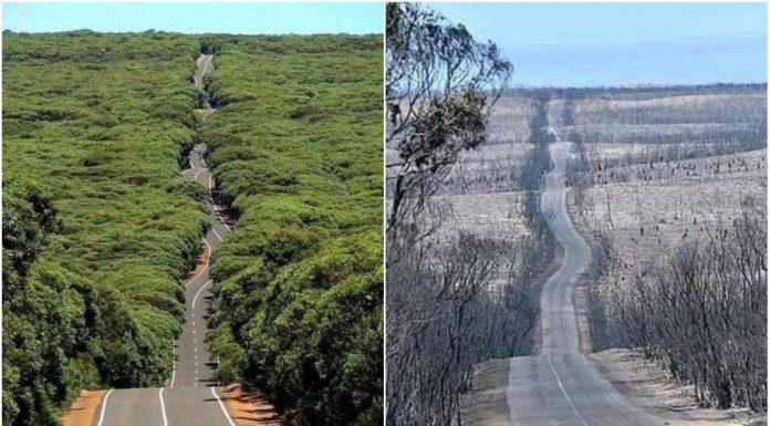 Klimatske promijene mijenjaju svijet fotografije