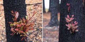 Predivne fotografije australske šume