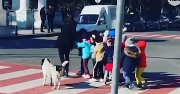 Pas lutalica pomogao djeci da sigurno prijeđu prometnu ulicu