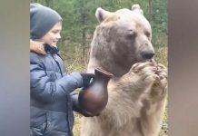 Dječak stoji pored ogromnog medvjeda i hrani ga mlijekom