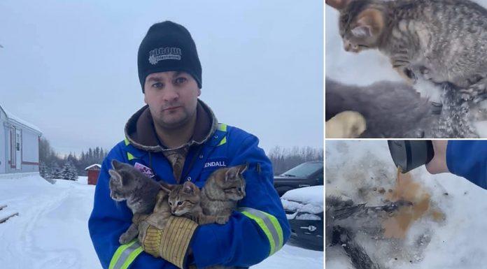 Brzom i domišljatom reakcijom je spasio tri smrznuta mačića