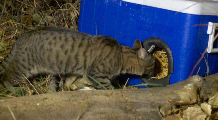 Od starih hladnjaka napravio je sklonište za mačke lutalice tijekom zime