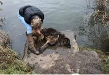 Prolaznica je pokušala spasiti psa