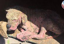 Zbog ''ružne bolesti'' su psa izbacili na ulicu