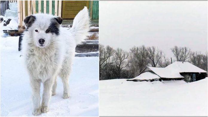 Pas spasio dječaka (2) kojeg je majka ostavila