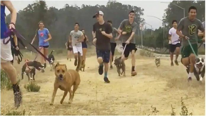 Škola uključila pse iz skloništa u jutarnje trčanje s učenicima