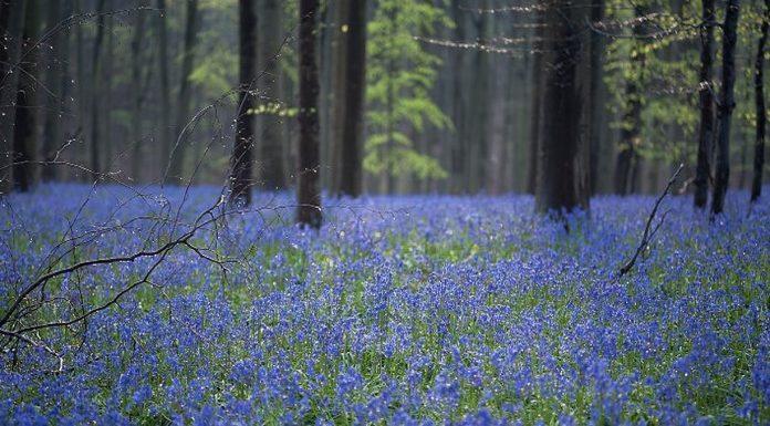 Ova šuma je toliko predivna da je teško vjerovati da postoji