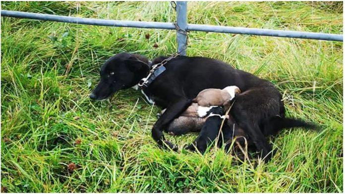 Kujicu su zavezali za ogradu, a kraj nje je bilo petero psića