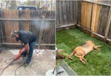 Muškarac je cijeli vikend pravio dvorište za udomljenog psa svoje djevojke