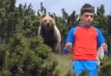 Dječaka (12) pratio medvjed, za dlaku mu je pobjegao