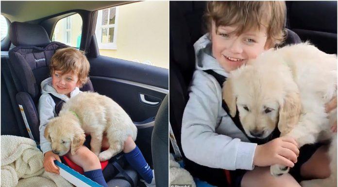 Stavila je psa u krilo autističnog sina, a reakcija ju je rasplakala