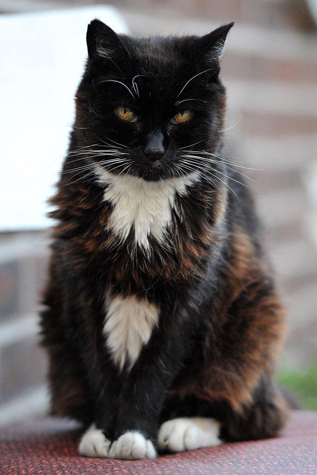 Najstarija mačka na svijetu