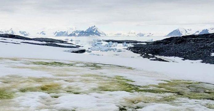 Zeleni snijeg na Antarktici