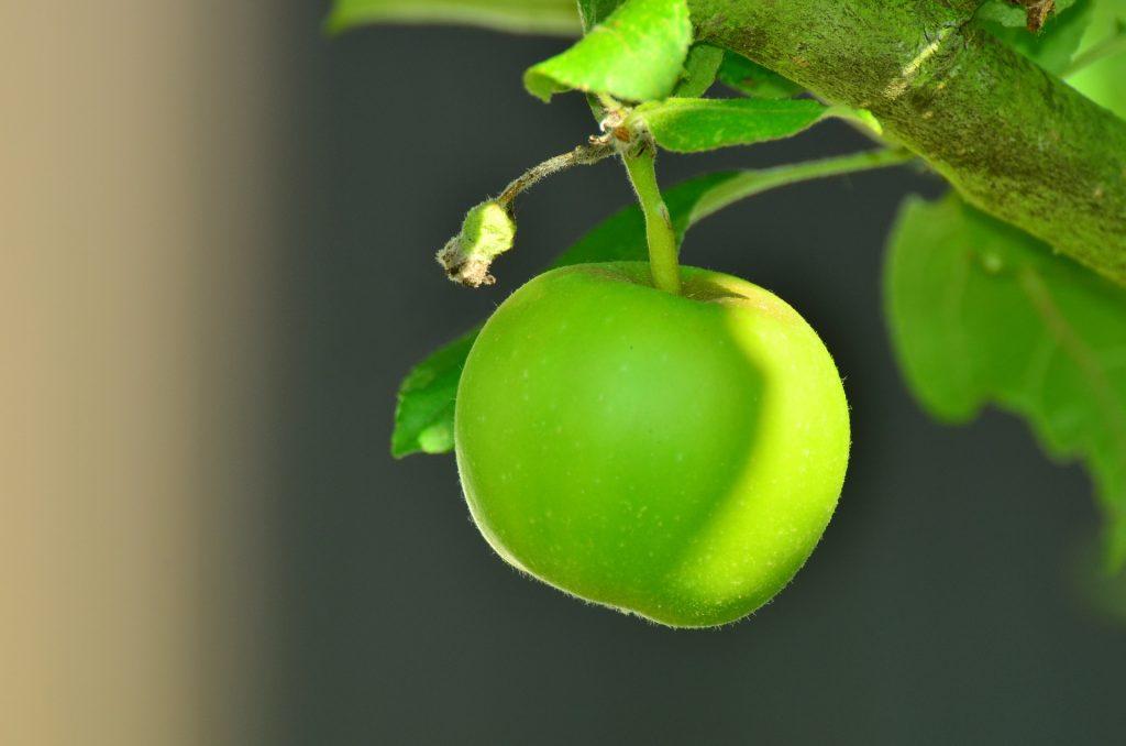 Jabuke su ljekovite