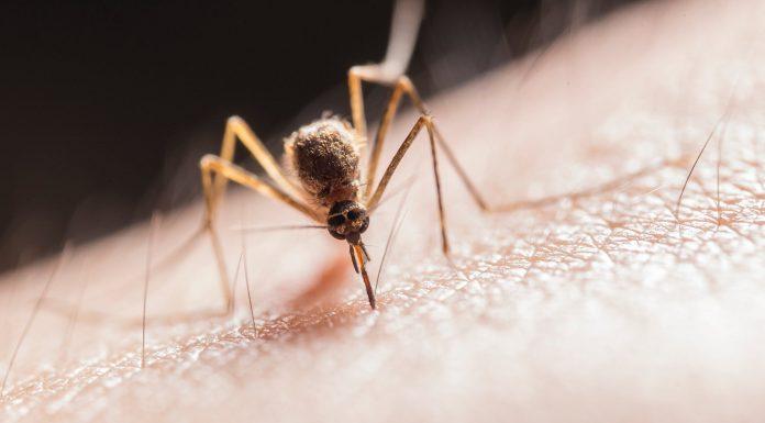 Pojavio se virus kojeg prenose komarci: