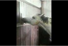 Zapitao se zašto konj ništa ne jede