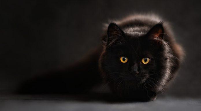 Vlasnicu ugrizla mačka koja je umrla, pronašli virus koji nije trebala imati