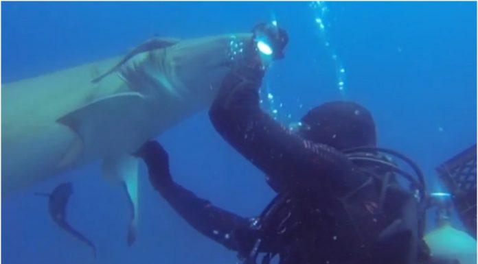 Morski pas se zahvalio roniocu koji mu je spasio život