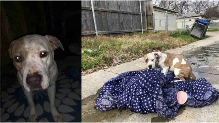 Napušteni pas je odbijao otići, nadao se da će se obitelj vratiti po njega