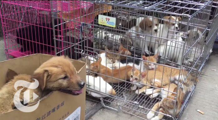 Jezivi prizori s tržnice u Kini: Posjetitelji čekaju porcije psećeg mesa