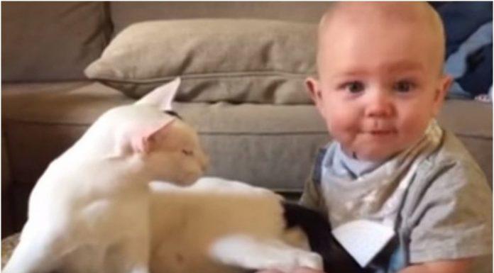 Roditelji nisu ni slutili kako će beba reagirati na mačku i obratno