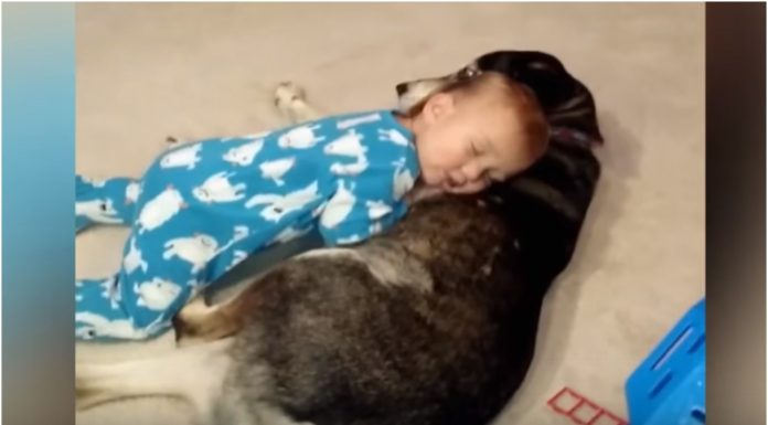 Dječak je pokušao ostati budan dok se igrao s psom