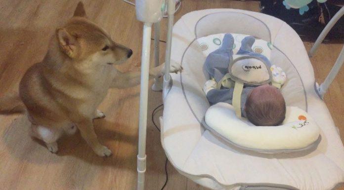 Ostavila je bebu s psom, a kad se vratila imala je što vidjeti